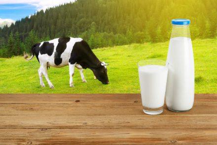 การบริโภคนมวัวดีสำหรับผู้ใหญ่หรือไม่? อธิบายข้อดีของความเป็นอยู่ที่ดี